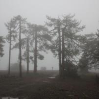 Олимп. 2 тыс. метров. Ежики в тумане. Тут градусов 12 по Цельсию...