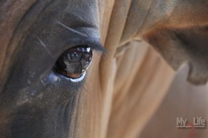 Canon 60D. Водяной буйвол. Близко к ним лучше не подходить