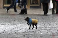 Собака в цветах украинского флага