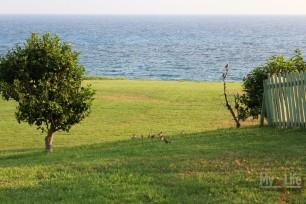 Cyprus010